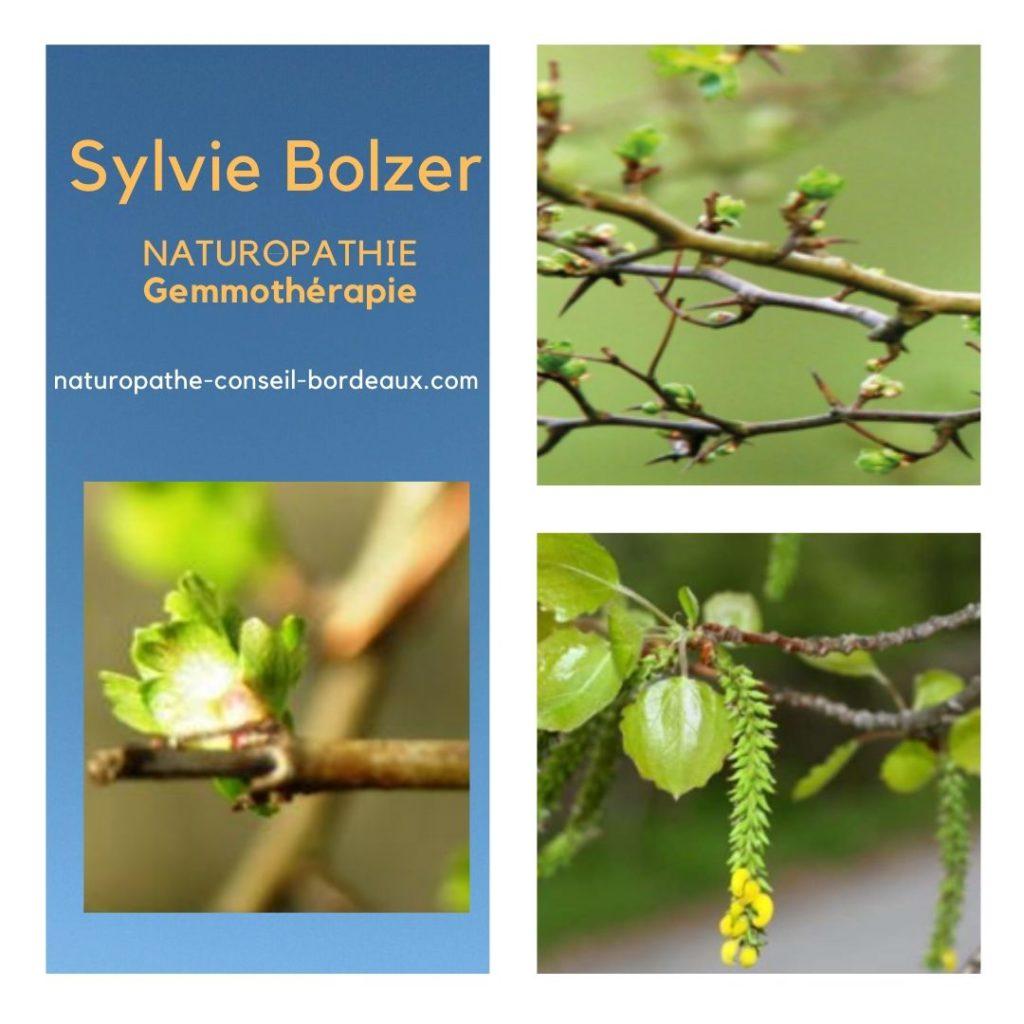 Sylvie Bolzer